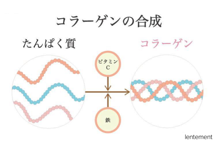 コラーゲンの合成のイメージ図
